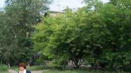Дома за деревьями