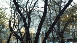 Банк за деревьями