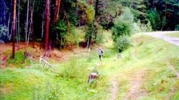 В лесу на Данилово озере