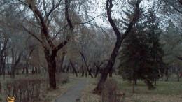 Опустел наш парк