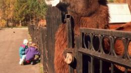 Прижизненный портрет верблюда