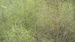 Зеленый шорох - 2