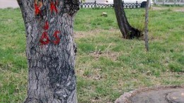 Дерево - столбик с ветками