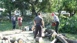 Заготовка дров - 4