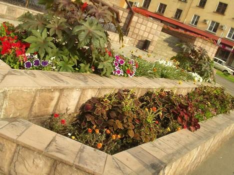 Цветы на проспекте Маркса