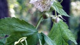 Цветок-ягода-цветок