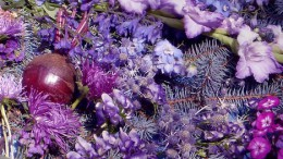 Капуста в окружении... Фиолетовое настроение Флоры 2004