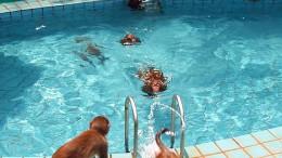Водоплавающие обезьяны