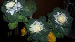 Капуста-роза