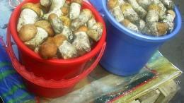 Омские грибочки
