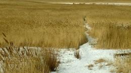 Прощальный взгляд на болото