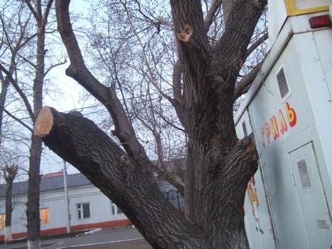 """из серии """"Деревья плачут"""""""