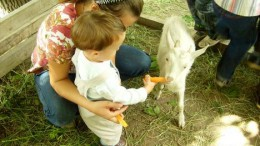Два малыша и морковка