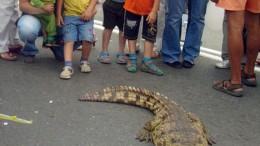 Рептилии на омских улицах