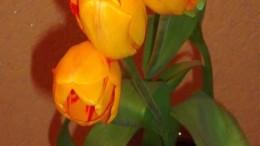 Тюльпаны - цветы весны