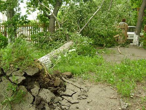 В нашем дворе ветер валил деревья