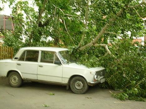 Дерево задавило автомобиль