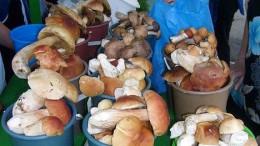 Омский рынок завален грибами