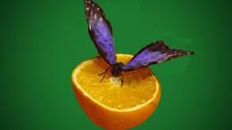 Бабочки в г Омске