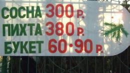 Цена пихты в Омске