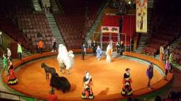 Омский цирк после болезни
