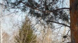 Синицы в парке