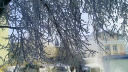 Иней на дереве