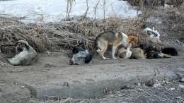 Семь собак