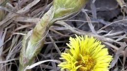 Первые цветочки 2012 года
