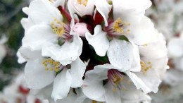Очарование весны