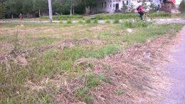 На некоторых газонах в Омске траву можно косить косой-литовкой или механическими косилками...
