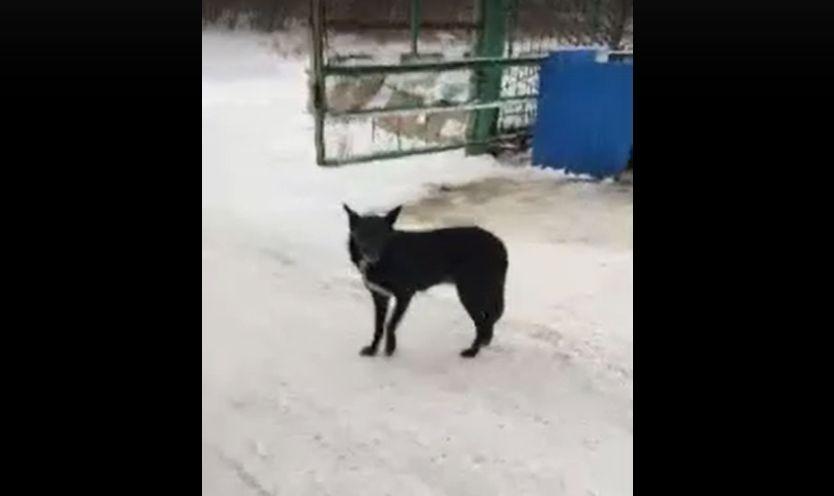 Спецавтохозяйство Омска и собаки