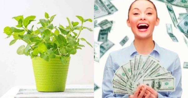 деньги и растения