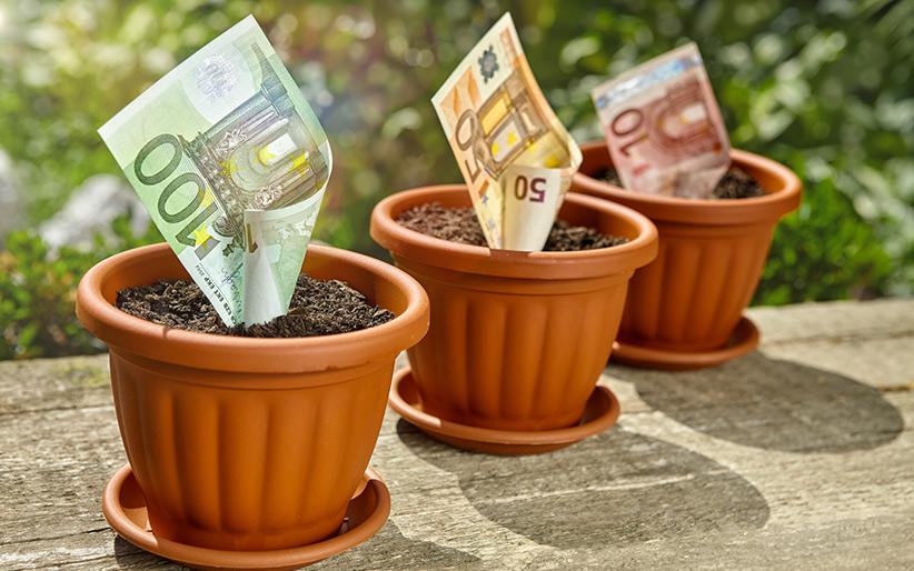 Цветочный горшок с деньгами